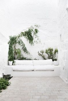 a couch with plants