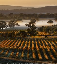 McLaren vale | http://www.viewretreats.com/mclaren-vale-fleurieu-peninsula-luxury-accommodation #travel