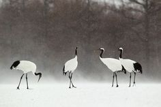 cranes by Peter Edge / 500px