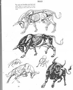 Art of Animal Drawing Animal Sketches, Animal Drawings, Art Drawings, Bull Painting, Bull Tattoos, Mexico Art, Bullen, Disney Concept Art, Drawing Projects