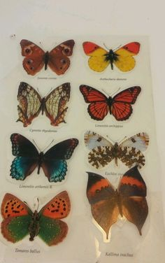 Butterfly Moth Insect  stickers HOL2 0007 set of 8 Vintage  Scientic names Set 8 #Unknown #Scientific