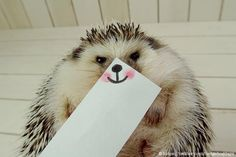 Marutaro the Hedgehog Poses With Paper Masks (14 Pics) | Pleated-Jeans.com