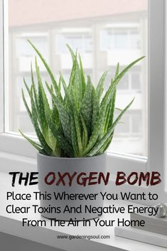 The Oxygen Bomb: Place This Wherever You Want to Clear Toxins, Negative Energy F. The Oxygen Bomb: Place This Wherever You Want to Clear Toxins, Negative Energy F. Container Gardening, Gardening Tips, Gardening Gloves, Organic Gardening, Gardening Services, Indoor Gardening, Gardening Books, Gardening Scissors, Herb Garden Indoor