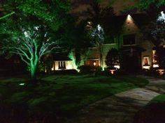 Moonlighting / Tree Lighting