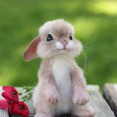 Rabbits are very social animals; Baby Animals Pictures, Cute Animal Photos, Cute Animal Drawings, Animal Pics, Cute Little Animals, Cute Funny Animals, Felt Animals, Animals And Pets, Cute Puppies