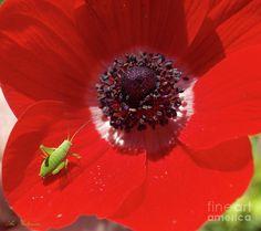 The Tiny  07 Photograph by Arik Baltinester