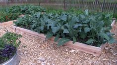 How to Have a Completely Organic Pest Free Garden by Simply Planting Lot...