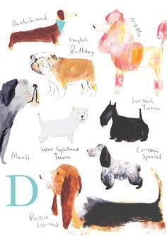 D for Dog Limited Edition Print