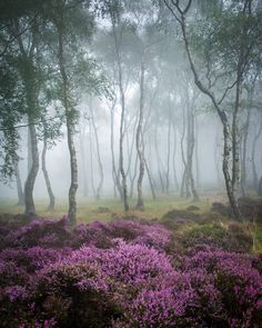 witchedways: drxgonfly: Misty Stanton 2 (by J C Mills Photography) bewitched forest