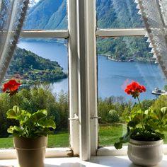 """627 Likes, 50 Comments - NORWEGIAN FJORDS (@norwegianfjords) on Instagram: """"View towards the Hardangerfjord from Ulvik in Hardanger, Hordaland, Norway. Photo: www.fjords.com…"""""""