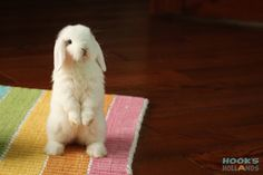 Photo gallery of cute bunny pictures of Holland Lops from Hook's Hollands Ohio Holland Lops. Hunny Bunny, Baby Bunnies, Rabbit Ears, Pet Rabbit, Cute Bunny Pictures, Animal Pictures, Holland Lop Bunnies, Funny Animals, Cute Animals