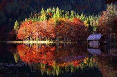http://www.nature-pictures.org/foto_DO_prezentacji/4058_20e950107194be4b810e555919b6147d_2.jpg