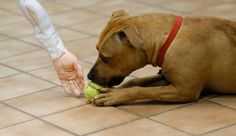 Is This Dog Dangerous? Shelters Struggle With Live-or-Die Tests