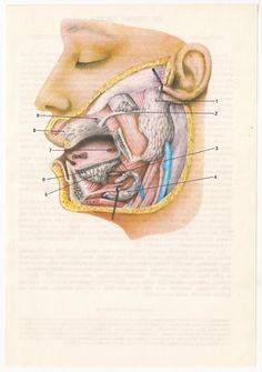 2 Vintage Anatomical Prints Medical Diagrams skull skeleton brain Illustrations Anatomy art Print  Paper Ephemera cyber monday Old Victorian