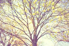 tree photograph autumn color photo nature by geishaphotography etsy