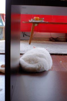 cat 2014年05月 : ねこごち