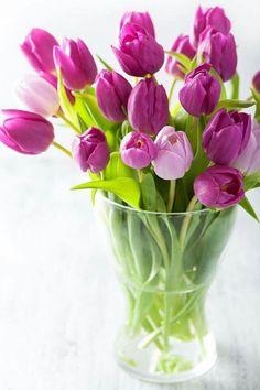 beautiful purple tulip flowers bouquet in vase by duskbabe. beautiful purple tulip flowers bouquet in vase Purple Tulips, Tulips Flowers, Pretty Flowers, Fresh Flowers, Spring Flowers, Planting Flowers, White Tulips, Tulip Care, Growing Tulips