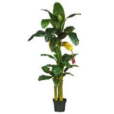 6 ft. Triple-Stalk Banana Silk Tree, Green