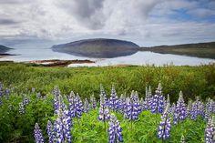 Iceland (by Andrej Kunka)