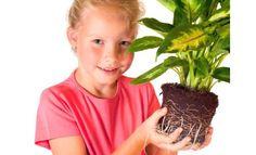 4 домашних и садовых растения, которые могут вас убить
