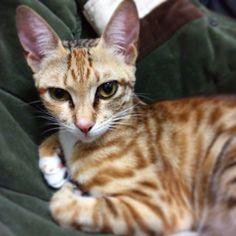 Hilarious pics of funny cats! funnycatsgif.com