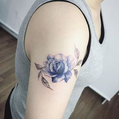 blue rose                                                                                                                                                     More