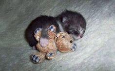 Kitten With Her Bear...