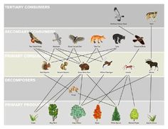 This link explains the redundancy present in the food web. It also provides many definitions related to diversity