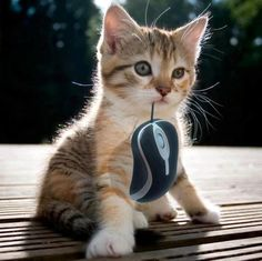 I got the mouse!