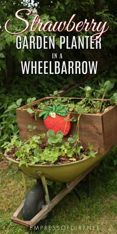 An old wheelbarrow makes a perfect stand for planting strawberries in containers. This rolling planter can be moved around, depending on whether the plants need shade or sun on any given day. Add a hand-painted strawberry sign for a cute touch. #gardening #planter #strawberry #gardenart #gardencraft #wheelbarrow #empressofdirt