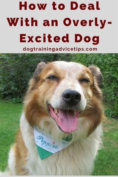 How to Deal With an Overly-Excited Dog | Dog Training Tips | Dog Obedience Training | Dog Training Ideas | http://www.dogtrainingadvicetips.com/how-to-deal-with-an-overly-excited-dog