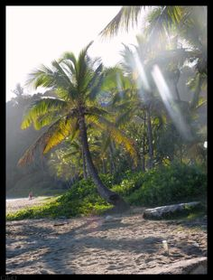 Grande Anse (la Réunion)
