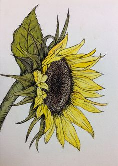 Watercolor & Ink. Watercolor Sunflower, Pen And Watercolor, Watercolor Pencils, Watercolor Flowers, Watercolor Paintings, Watercolours, Botanical Line Drawing, Botanical Art, Small Art