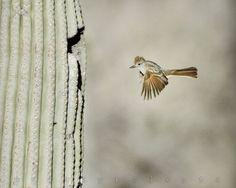 Desert Bird In Flight Art Photography Cactus Art by MurrayBolesta, $50.00