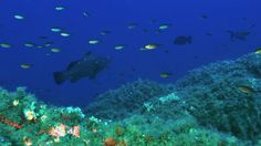 Secca di Mezzo - Subaqva Diving Center - Villasimius