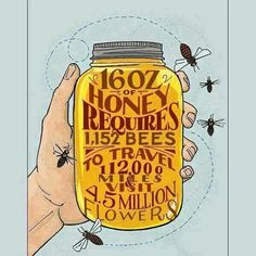 16oz of Honey!  Call A1 Bee Specialists in Bloomfield Hills, MI today at (248) 467-4849 to schedule an appointment if you've got a stinging insect problem around your house or place of business!  Visit www.a1beespecialists.com for more information!
