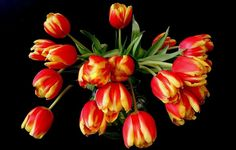 paintings of red and orange tulips - Yahoo Image Search Results Flower Backround, Yellow Tulips, Yellow Vase, Light My Fire, Whimsical Wedding, Flower Pictures, Flowers Pics, World Best Photos, Still Life Photography