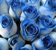 Blue Roses!!!! YESSSSSS
