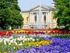 Blumenbeet mit Blick auf Hallesche Oper