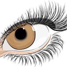 Every one want their eyes to stand out and look beautiful, which is not possible if you have thin, short eyelashes as eyelashes add beauty to the eyes making them look gorgeous and attractive. Full and thick lashes creates a voluptuous look that complements the rest of the facial details. Although mascaras, fake eye lashes …