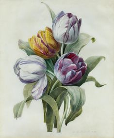 Image result for pierre joseph redoute Botanical Illustration, Illustration Art, Illustrations, Joseph, Old Paintings, Tulips, Flora, Paper Crafts, Watercolor