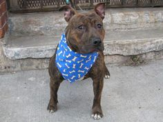 TO BE DESTROYED THURSDAY, 3/20/14. My name is CHARLIE. My Animal ID # is A0993792. I AM ONLY ONE YEAR OLD!