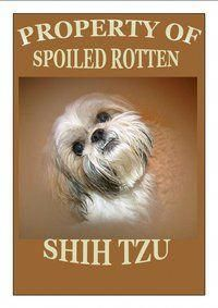 """Outstanding """"shih tzu puppies"""" detail is available on our internet site. Take a look and you will not be sorry you did. Cute Puppies, Cute Dogs, Dogs And Puppies, Shih Tzu Puppy, Shih Tzus, I Love Dogs, Puppy Love, Animals And Pets, Cute Animals"""