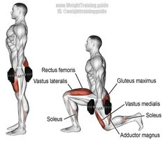 A compound unilateral exercise. Target muscles: Gluteus Maximus and Quadriceps (Vastus Lateralis Vastus Medialis Vastus Intermedius and Rectus Femoris). Synergistic muscles: Adductor Magnus and Soleus. Dynamic stabilizers (not high Dumbbell Workout, Butt Workout, Muscle Fitness, Mens Fitness, Form Fitness, Fitness Workouts, Workout Guide, Weight Training, Weight Lifting