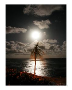 Lunar Palm Photographic Print by Thomas Hannsz at AllPosters.com