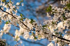 Blossom by Marcel Ilie on Study Help, Marcel, Bible, Fruit, Green, Plants, Biblia, The Bible, Planters