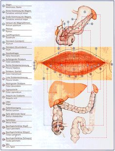Image result for Pathophysiognomik nach Natale Ferronato pdf Micro Word, Best Chiropractor, Accupuncture, Cupping Therapy, Acupuncture Points, Chiropractic Care, Massage Techniques, Naturopathy, Alternative Treatments