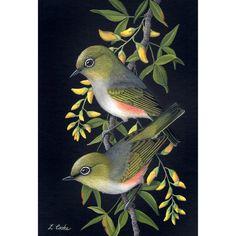 Paintings for Sale – Lyn Cooke Artist Australian Animals, Australian Art, Bird Artwork, Bird Illustration, Illustrations, Bird Drawings, Colorful Birds, Bird Prints, Paintings For Sale