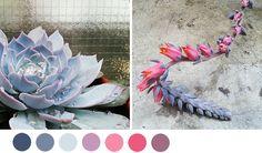 succulent-palette