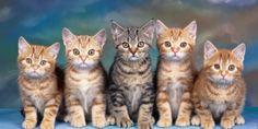 """10 fotoğrafla """"sokakta kalmaması"""" garanti kedi yavruları"""